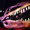 The Franklin Institute's 'Giant Mysterious Dinosaurs' Exhibition