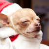 Buzz: 'Give a Dog a Bone' Christmas in July Party