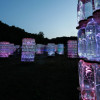 Buzz: Light Installations by Bruce Munro at Longwood Gardens