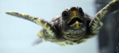 Adventure Aquarium Presents Turtles: Journey of Survival