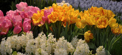 Buzz: The 2014 Philadelphia Flower Show