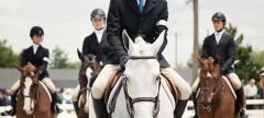 Buzz: The Devon Horse Show 2014