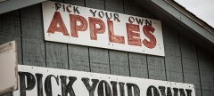 Buzz:  Apple Picking Guide Fall 2014