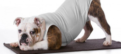 Buzz: bulldog yoga Opening in Villanova