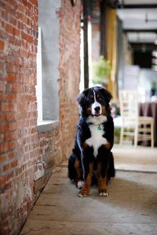 T.J. is Donna's constant companion and best friend. A one-year-old Bernese Mountain Dog, he walks with her to work each day and has a pseudo-celeb status in their neighborhood.