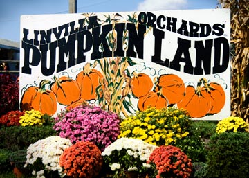 Linvilla Orchards Pumpkin Land