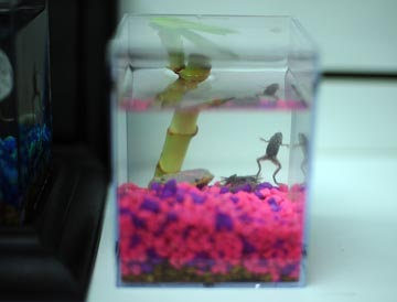Wild Creations' Eco Aquariums are a popular choice for families who want a low maintenance family 'pet.'