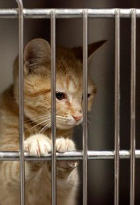 Over 34,000 animals a year come through the doors of Philadelphia's animal control.