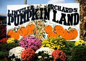 Linvilla Pumpkinland