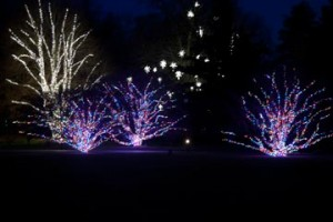 More than 500,000 outdoor lights adorning 75 trees in classical and free-style form styles enchant both young and old.