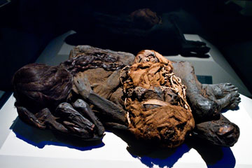 The concept for the exhibition began with the German Mummy Project's re-discovery of 20 specimens within the Reiss-Engelhorn Museums of Mannheim, Germany in 2004.
