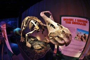 """The spectacular collection belongs to the world's leading dinosaur collector and popularizer, Don Lessem. """"Dino"""" Don, a Philadelphia area resident, has excavated and re-created dinosaurs from Argentina to Mongolia, including the world's largest meat-eater and plant-eater. Lessem was an advisor to the movie Jurassic Park."""