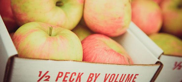 2012 AML Apple Picking Guide