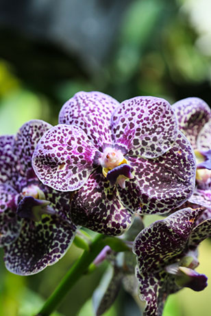 Longwood Gardens' Orchid Extravaganza opened January 19th with more than 5,000 orchids on display. It runs through March 24th. In all, more than 5,000 blooming orchids will delight the senses!