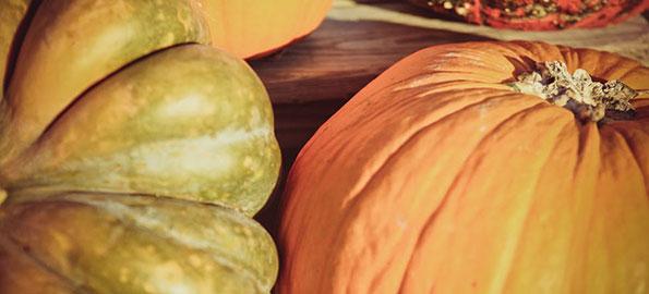 Best Pumpkin Picking Around the Main Line 2013