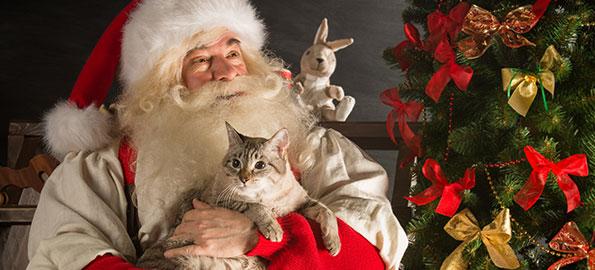 Delco SPCA: Take Me Home for the Holidays Event