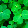 St. Patty's Day Events Around the Main Line