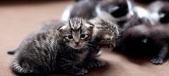 Philadelphia's Super Pet Adoption Day