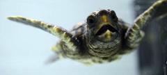Adventure Aquarium Presents Turtles: Journey of Survival