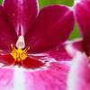 Buzz: Longwood Gardens' Orchid Extravaganza