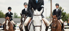 Buzz: The Devon Horse Show 2014