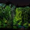 Buzz: Longwood Gardens' Nightscape